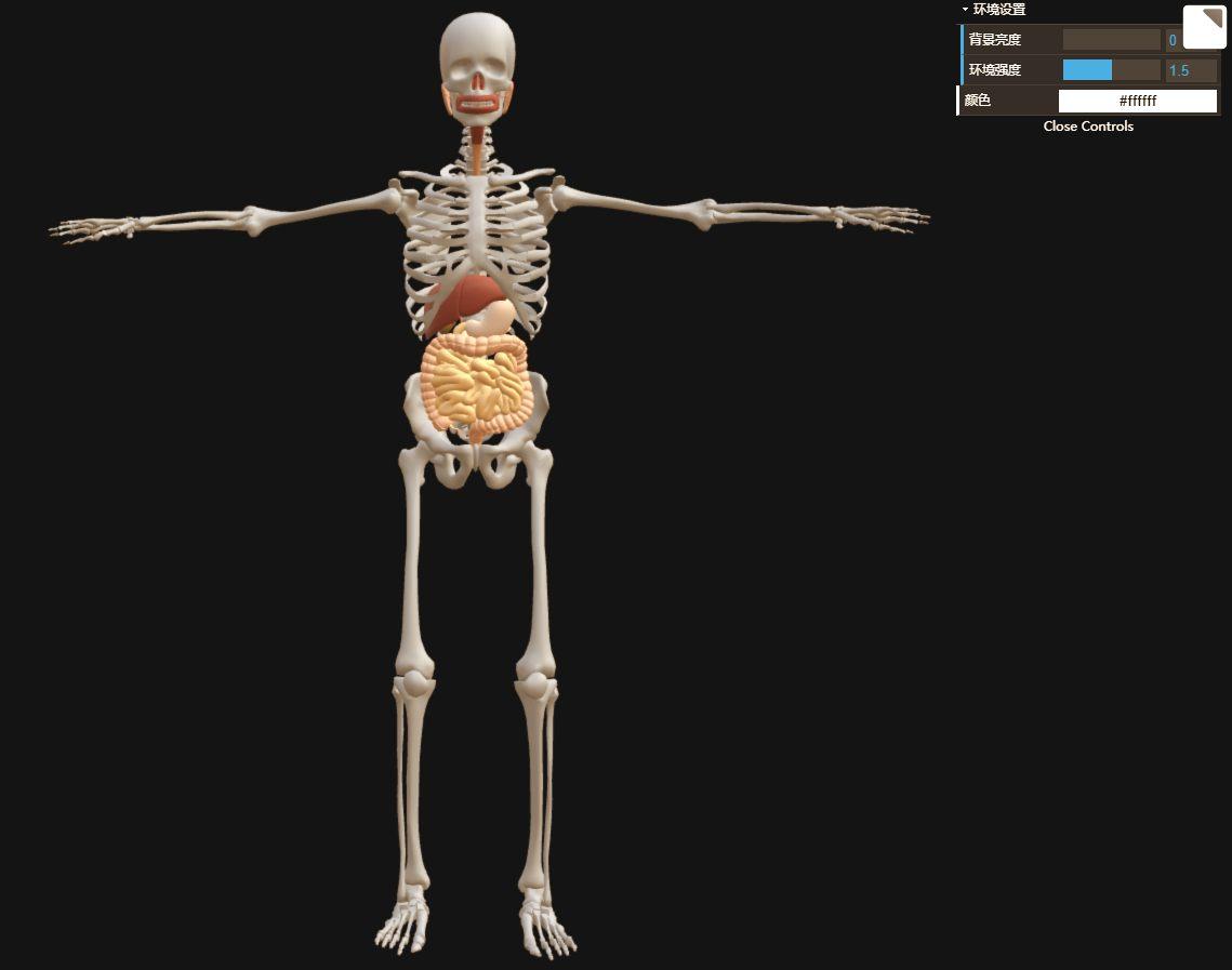 人体结构交互式教学之消化系统