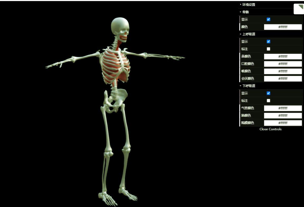 3D交互式人体结构教学之呼吸系统