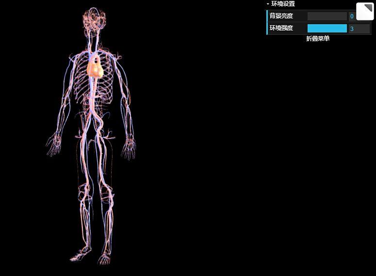 人体心血管系统在线3D交互式教学展示